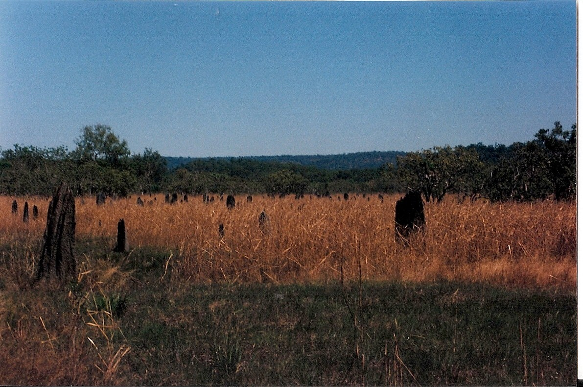 Termite hills in Norther Australia0001